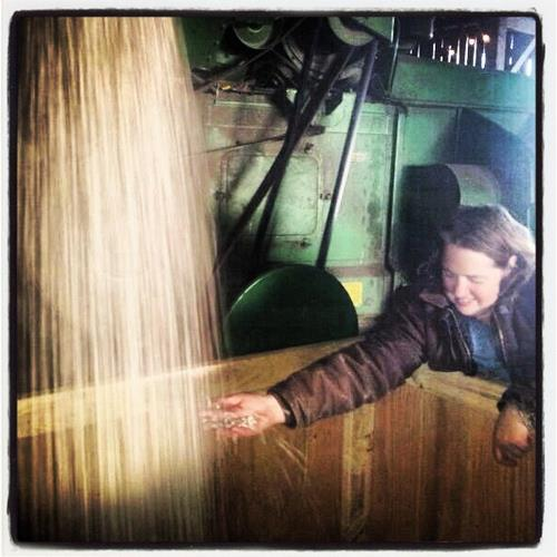 Harvesting 2000 lbs or Rockwells. I
