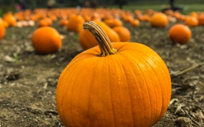 Why a Pumpkin is a Squash and a Squash is a Pumpkin