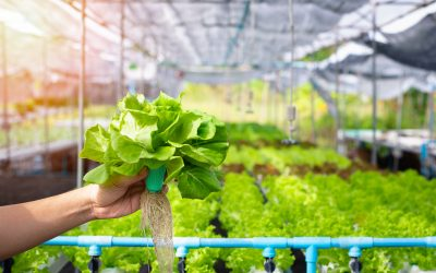 Indoor and Vertical Farm Companies are Booming
